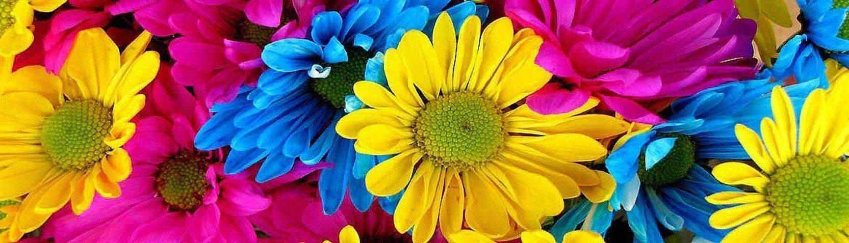 Collezioni - Quadri fiori