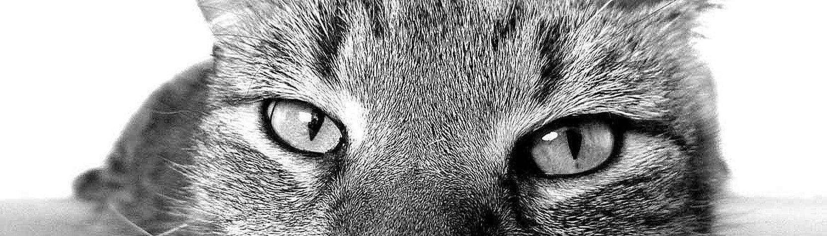 Fotografia - Foto di animali
